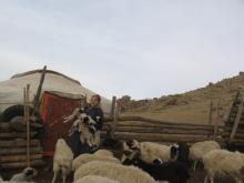 A student shows off her Mongolian sheep